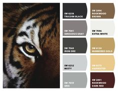 """""""Eye of the Tiger"""" - Color Palette Inspiration Chip It! by Sherwin-Williams – Home"""