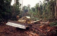 'Rainforest Conservation - This picture should move you'