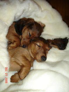 Such sweet sleeping babies