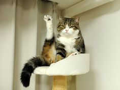 'Talk to the Paw!'