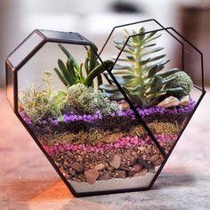 Modern Glass Geometric Terrarium Octagon Tabletop Succulent Fern Moss Plant Terrarium Box Bonsai Flower Pot