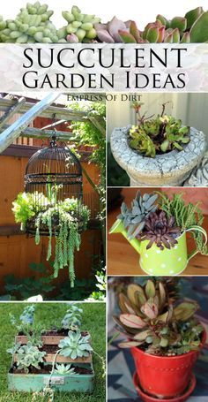 Succulent garden ideas @notasissy88 can you get to work on the bird cage one?