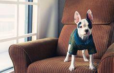 큐레이터 이영진 ::  '어머, 귀여워~' 란 탄성을 자아내게 만들었던 재킷인데요. 색감도 그렇고 디자인도 그렇고 강아지에게도 이런 스타일리시함을 줄 수 있구나 싶어서 좋더라고요. 특히 요즘은 난방을 강하게 안 하시잖아요. 실내 공기가 차가워도 이 재킷이면 안심될 것 같아요.