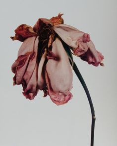 """First edition of this iconic collection of photographs of flowers taken between Quarto, original beige cloth. Signed by the author in the year of publication, """"Irving Penn New York on the half title page. Irving Penn Flowers, Fashion Gone Rouge, Hades And Persephone, Greek Gods, Greek Mythology, Underworld, Aphrodite, At Least, Still Life"""