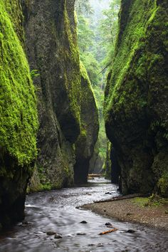 The Oneonta Gorge is in the Columbia River Gorge with a unique set of aquatic and woodland plants. The ferns and moss make the walls look like a fairy tale, and visitors can walk through the creek on a warm summer day.