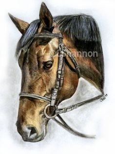 Hand drawn x colour pencil by Crystal Shannon Horse Portrait, Horse Drawn, Pencil Art, Pet Portraits, Colored Pencils, Fur Babies, Hand Drawn, How To Draw Hands, Sketches
