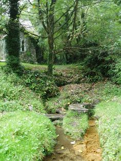 Sacred Well: Gumfreston Holy Wells, Pembrokeshire, Wales. The three wells are said to be of different qualities---one pure, one sulphur, and one chalybeate.