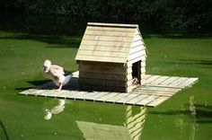 Image Search Results for floating duck house