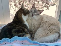 The tabby took to the the peachy floof ball boy like a father when he was found as a kitten - a father's love never ceases. <3