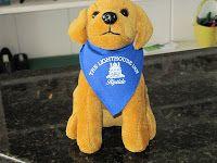 Lighthouse Inn's own Mini Riptide Dog
