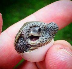 Awwww  Baby turtle