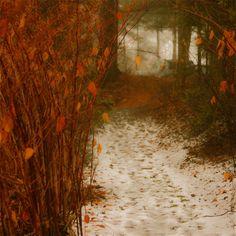 Denis Collette (Canada) - Neige en poème sur mon sentier près de ma rivière sauvage