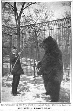 Training a Brown Bear