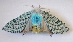 Sculpture de tissu - art textile grand papillon de nuit
