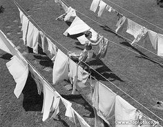 1950s WOMAN HANGING LAUNDRY OUT TO DRY SEVERAL CLOTHESLINES OUTDOOR FRESH