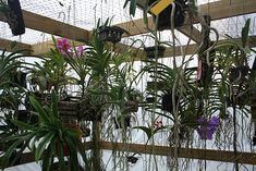 Wire mesh for hanging baskets.Orchid House / Growing Areas #orchids #orchidhouse #greenhouse