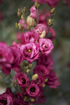 95 best dreamy eustoma lisianthus images on pinterest beautiful pink lisianthus flowers for the reception tables mightylinksfo
