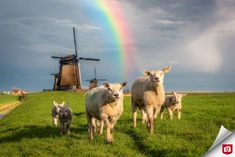 Happy Family, Goats, Camel, Cow, Animals, Dutch, Animaux, Dutch Language, Animales
