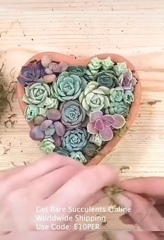 Learn how to decorate your own succulents garden. Get your rare succulents online. Use Discount Code: We bring joy to your home gardening experience! Succulents Online, Growing Succulents, Succulents In Containers, Cacti And Succulents, Planting Succulents, Planting Flowers, Succulent Gardening, Succulent Pots, Container Gardening