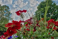 The flowers and clouds were in cahoots this morning.