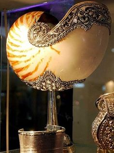 BEAUTIFUL NAUTILUS! Does anyone  know where I can buy this????