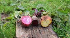 11 érdekes gyökérzöldség mindenki kertjébe