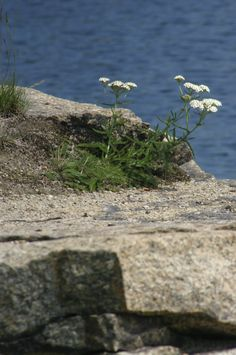 To Life!   Granite Quarry at Halibut Point State Park, Rockport, MA.