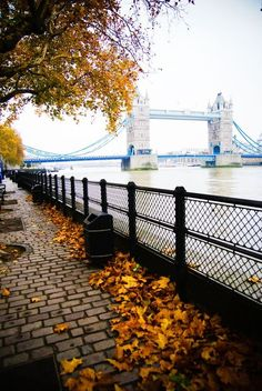 Autumn, The Thames, London, England ,blessed Autumn