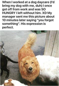 Funny Dog Memes, Funny Animal Memes, Cute Funny Animals, Funny Animal Pictures, Cute Baby Animals, Funny Cute, Cat Memes, Funny Dogs, Cute Animal Humor