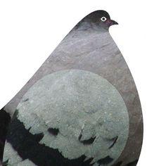pigeon | Scott Partridge | illustration digital