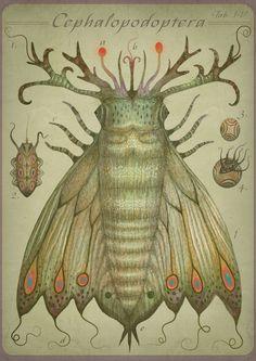 Cephalopodoptera tab IV - Art print. $23.00, via Etsy.