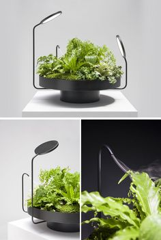 Design studio Goula / Figuera have created a collection of matte black planters called Viride (the Latin word for green) that include artificial lights (and one with a mister) as part of their design. Black Planters, Hanging Planters, Luz Artificial, Indoor Farming, Indoor Gardening, Gardening Tips, Smart Garden, Plant Lighting, Paludarium