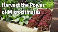 Garden microclimates have the potential to dramatically boost harvests – if you know how to use them. Warm walls, suntrap corners, shady areas, raised beds a...