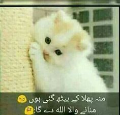 Haha haha haha don't worry baby Poem Quotes, Funny Quotes, Funny Memes, Life Quotes, Tom And Jerry Funny, Very Funny Jokes, Funny Stuff, Dp For Whatsapp, Urdu Love Words