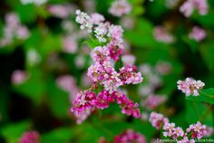 Circuit triangle flowers in Ha Giang erywhere Travel News, New Travel, Road Trip, Seasons, Circuit, Flowers, Triangle, Adventure, Road Trips