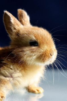 Cute baby bunny... who's to say this one's cute? They're all ADORABLE!!!