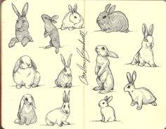 Bunny Sketches, Animal Sketches, Animal Drawings, Art Sketches, Art Drawings, Bunny Tattoos, Rabbit Tattoos, Rabbit Drawing, Rabbit Art