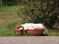 Los 30 perros que imponen la nueva moda a la hora de dormir