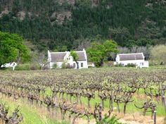 Escape to the Western Cape Winelands - The Western Cape #Winelands is one of the most popular destinations for international as well as local travelers during the summer seasons with all its ongoing activities and events. Read more ...