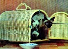 3D Lenticular Cute Cat Postcard Siamese Basket from Lantor Ltd., $2.50: After interlacing photos taken from multiple angels, a laminated, composite image can achieve the illusion of 3D with the help of a high-resolution lenticular lens. Here we have neat, cute retro pics of adorable kittens, purrrfect for grandma, collectors, kids, and hip, cat-themed parties! Click here to purchase: http://www.lantorlimited.com/3D-Lenticular-POSTCARD-BASKET-SIAMESE-CatS-p/ssp-221-pc.htm