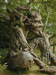 Old Man Tree.Love the tree Guardians. I can see myself reading here! Weird Trees, Enchanted Tree, Magical Tree, Tree People, Tree Faces, Tree Carving, Unique Trees, Old Trees, Nature Tree