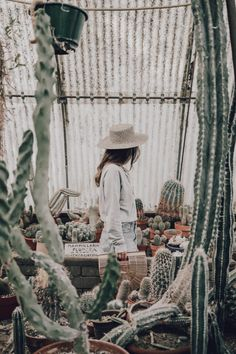 love the mood - Botanical Gardens Trend Cactus Photography, Vintage Photography, Portrait Photography, Photography Ideas, Cactus Photoshoot, Collage Vintage, Foto Instagram, Cool Plants, Senior Pictures