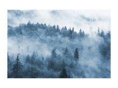 Click to see 'misty forest' on Minted.com