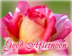 Good Afternoon - Best Pictures, GIFs & Quotes. #GoodDayWishes, #GreetingsPics http://greetings-day.com/good-afternoon-best-pictures-gifs-quotes.html