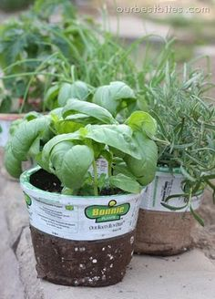Good info here about growing, cutting, cooking with, and preserving herbs
