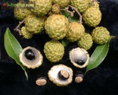 Dimocarpus didyma / alupag