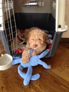My Hugo at 9 weeks