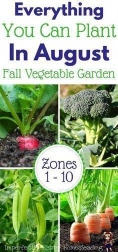 Vegetables Gardening Everything you can plant in August for a Fall Garden. - What seeds to plant in August for an awesome Fall garden. Zone 9 and 10 listed. Have your best vegetable garden ever! Veg Garden, Edible Garden, Veggie Gardens, Garden Club, Planting A Garden, Garden Tools, Gardening Zones, Gardening Tips, Gardening Courses