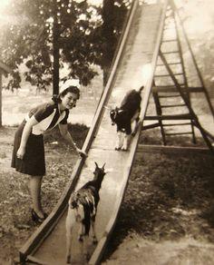 Goats on an old metal slide .. Too Cute ! This is a smile a giggle and a laugh ..Wa- hoooooooo !!!