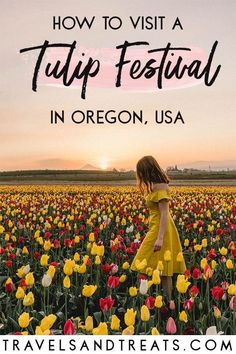 Visit Wooden Shoe Tulip Festival in Oregon, an easy day trip from Portland. Oregon Road Trip, Oregon Travel, Travel Usa, Travel Info, Oregon Camping, Travel Tips, Canada Travel, Travel Guides, Florida Keys